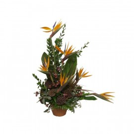 Arrangement Tendance Tropical